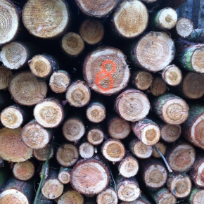Treetrunk Countdown